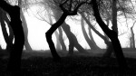 light black and white trees night forest darkness 1920x1080 wallpaper_www.miscellaneoushi.com_7